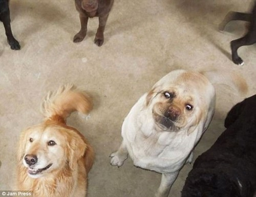 There's always one! This silly pooch managed to ruin the photo with a hilarious facial expression