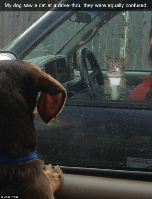 This dog and cat appeared to make friends as they stared at each other through the window