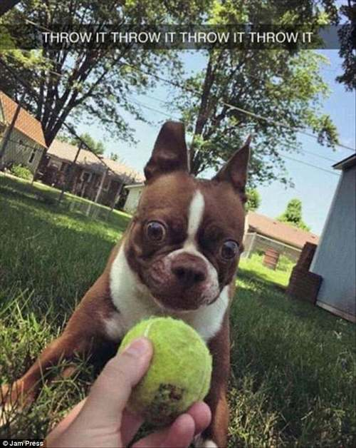 This dog meanwhile was eagerly anticipating the ball being thrown, as his wide eyes show