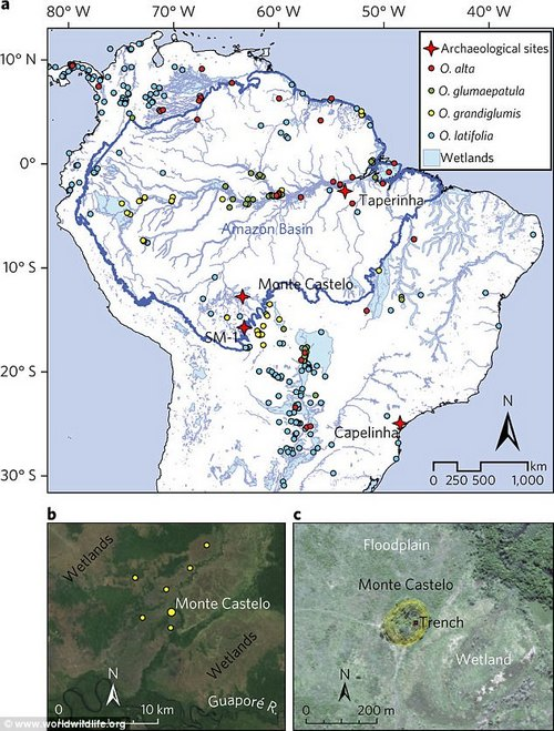 Study region. (a) Distribution of Oryza species, wetlands in South America and important early shell mound sites in South America. (b) Map showing the location of the Monte Castelo. (c) The Monte Castelo locality, topographical map and location of the 2014 trench excavation