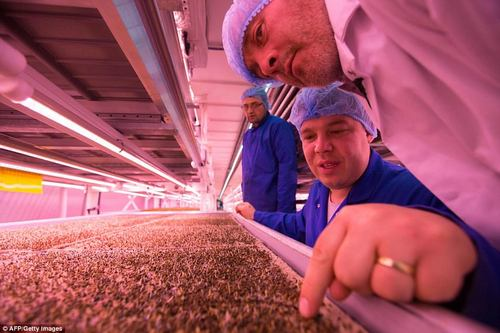 Nottingham University's Centre for Urban Agriculture said on its website that urban farms create jobs, reduce transport costs and pollution as well as offering an 'opportunity to develop technologies'