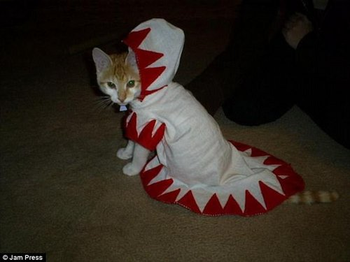 I'm so scary! It's not clear what this cat was supposed to be dressed up as, but it's certainly a good look