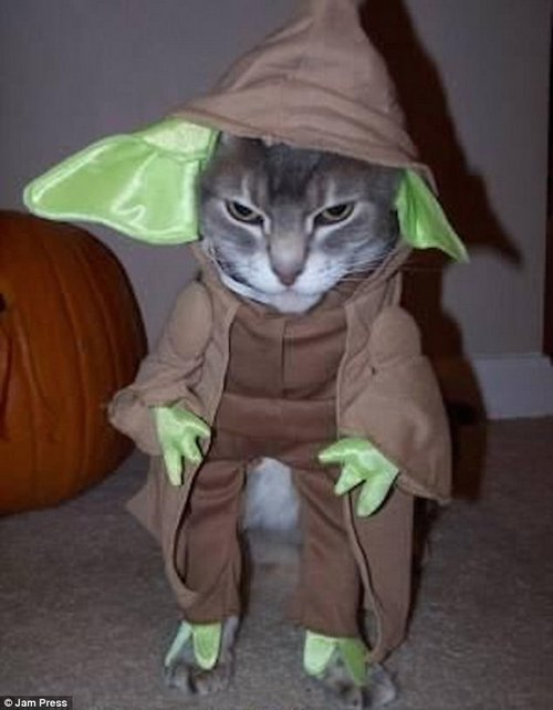 All it takes to start feeling wise is a quick change into a Yoda costume