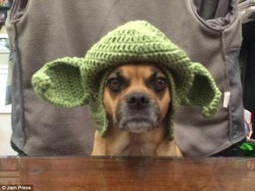 This dog was clearly hoping nobody saw him with this hat on