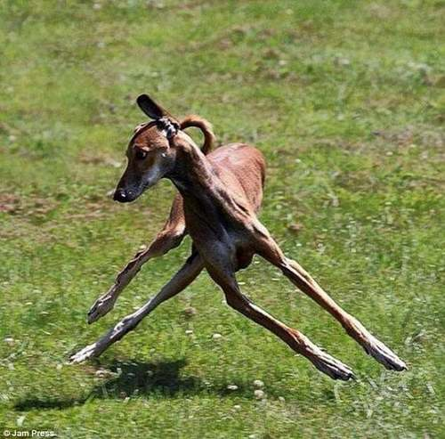 Back legs to the left, front legs to the right - or is there another animal involved in this tricksy shot?