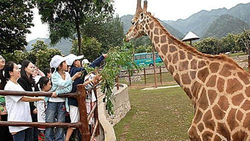 Xi'an Qinling Wildlife Park (pictured) is a popular zoo in Xi'an, the provincial capital of Shaanxi