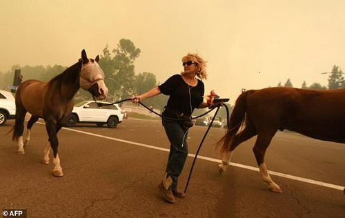 A woman evacuates horses in Orange, California, as smoke from the Canyon 2 fire can be seen in the background
