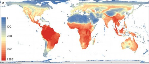 Richness of all tetrapods (reptiles, amphibians, birds and mammals). Scale bar values represent species richness. grey areas denote terrestrial regions devoid of species in a particular group. Blue colors denote regions with few species and red ones denote regions with many species