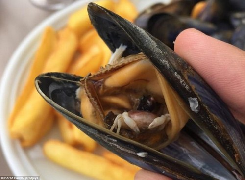 Extra value for money: This mussel contains a tiny crab
