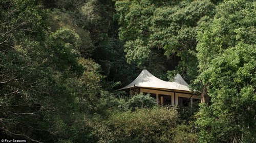 Nestled deep in the historic Golden Triangle region between Thailand, Burma and Laos, the Four Seasons Tented Camp Golden Triangle offers a luxury camping experience in the heart of the jungle