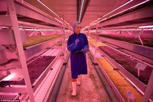 Staff wear protective clothing and there is a strong smell of vegetables and humidity in the shelter. The vegetables are grown with hydroponics, using nutrient solutions in a water solvent instead of soil