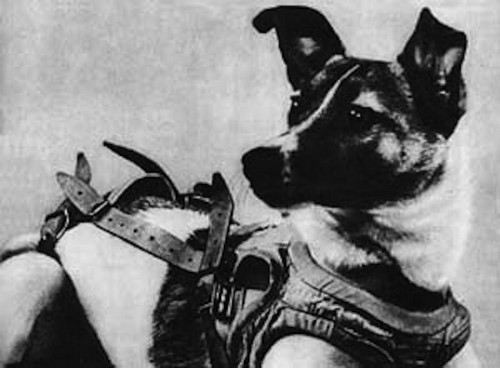 A stray dog became the world's first cosmonaut 60 years ago today