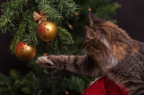 Let your pets destroy your tree in peace and quiet.