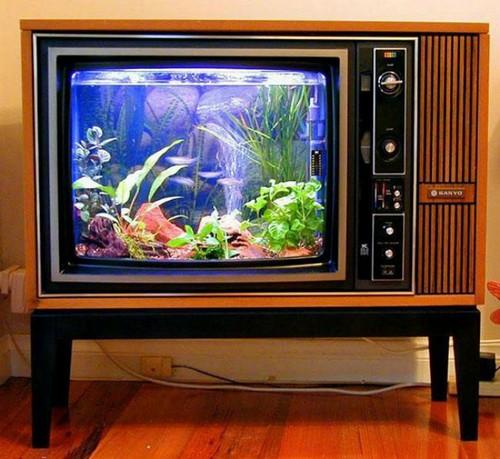 Аквариум в старом телевизоре.