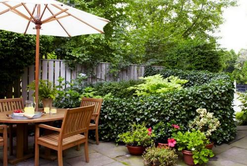 Живая изгородь в саду.