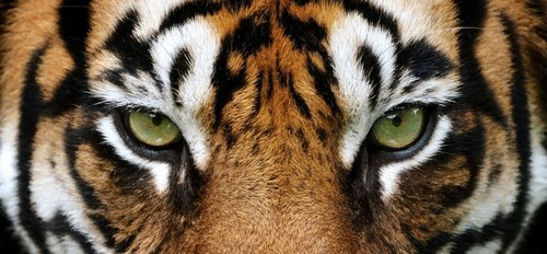 Want to Be More Productive? Start Thinking Like a Wild Animal