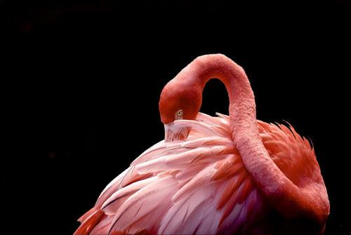 2019 Pantone Living Coral Flamingo