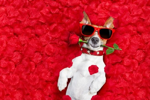 20 Trendy Valentine's Day Design Ideas to Inspire You - Pet Lovers