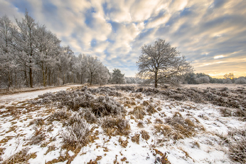 Professional Tips for Magical Winter Landscape Photos - Give Room for Editing