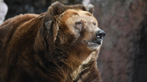 Warm Winter Wakes Moscow's Bears Early