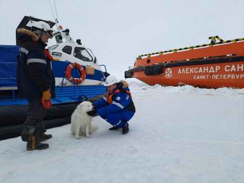 Russia Arctic Sailors Rescue Lost Dog After Weeklong Search